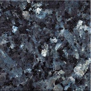 labrador-bleu